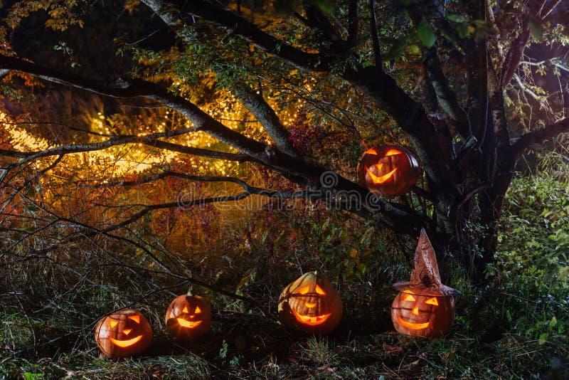 Halloween pumpkins in night forest. Halloween pumpkins in night mystery forest royalty free stock images