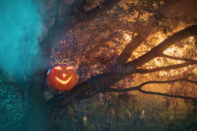 Halloween pumpkins in night forest. Halloween pumpkins in night mystery forest stock images