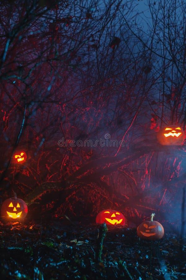 Halloween pumpkins in night forest. Halloween pumpkins in mystery night forest stock photo