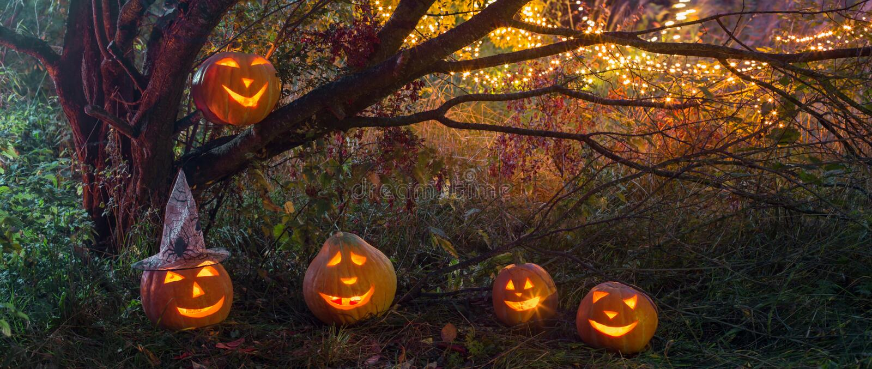 Halloween pumpkins in night forest. Halloween pumpkins in night mystery forest royalty free stock photos
