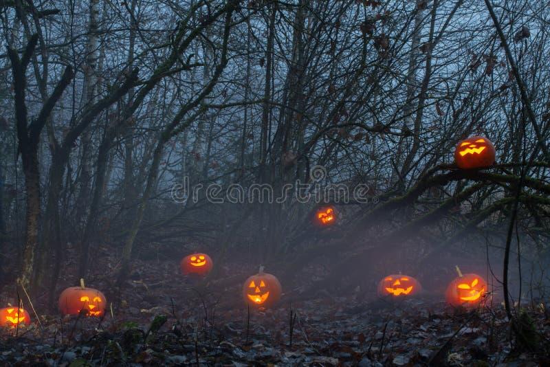 Halloween pumpkins in night forest. Halloween orange  pumpkins in night forest stock photo