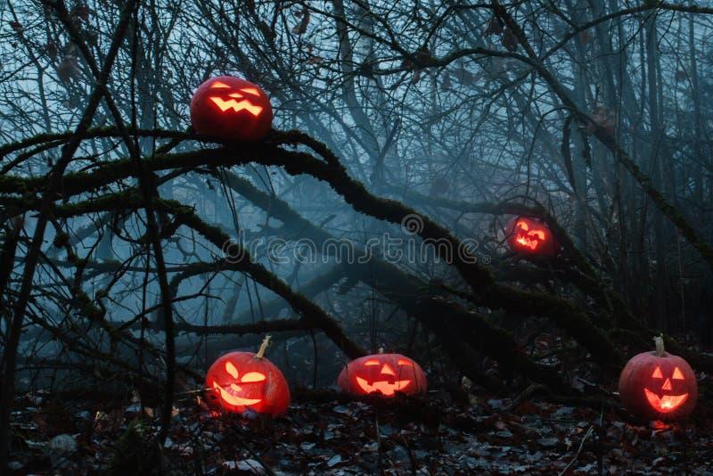 Halloween pumpkins in night forest. Orange Halloween pumpkins in night forest stock photography