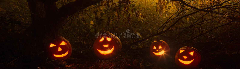 Halloween pumpkins in night forest. Halloween pumpkins in night mystery forest royalty free stock photo