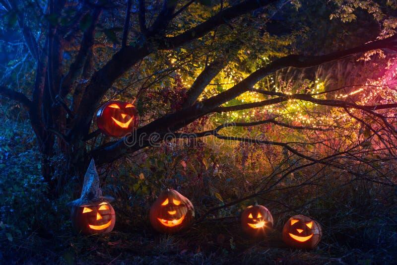 Halloween pumpkins in night forest. Halloween pumpkins in night mystery forest royalty free stock image