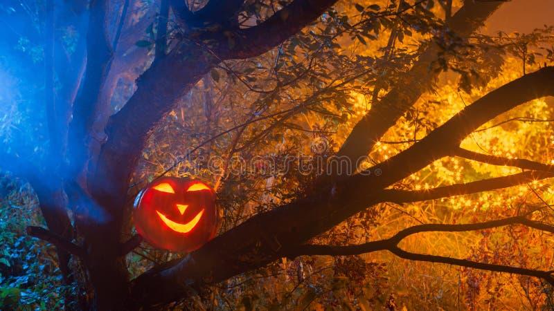Halloween pumpkins in night forest. Halloween pumpkins in night mystery forest stock image