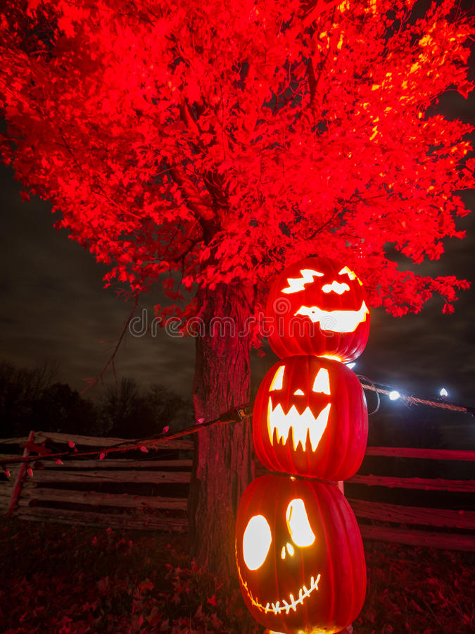 Halloween Pumpkins at night. Some stacked halloween pumpkins lit up in the evening in front of a tree and fence stock photography
