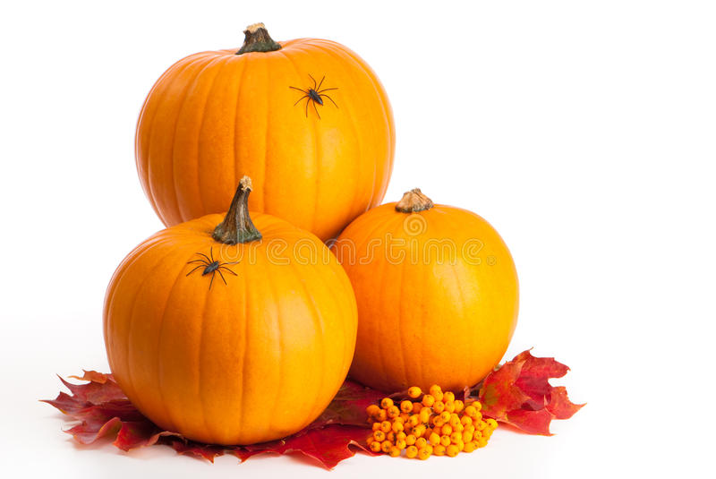 Halloween Pumpkins With Spiders stock photography