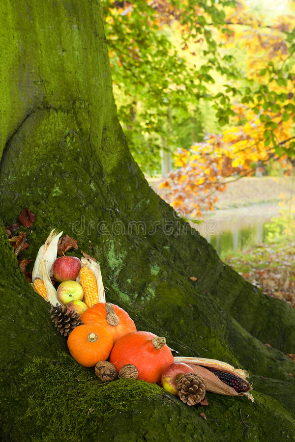 Halloween pumpkins on a tree stock image