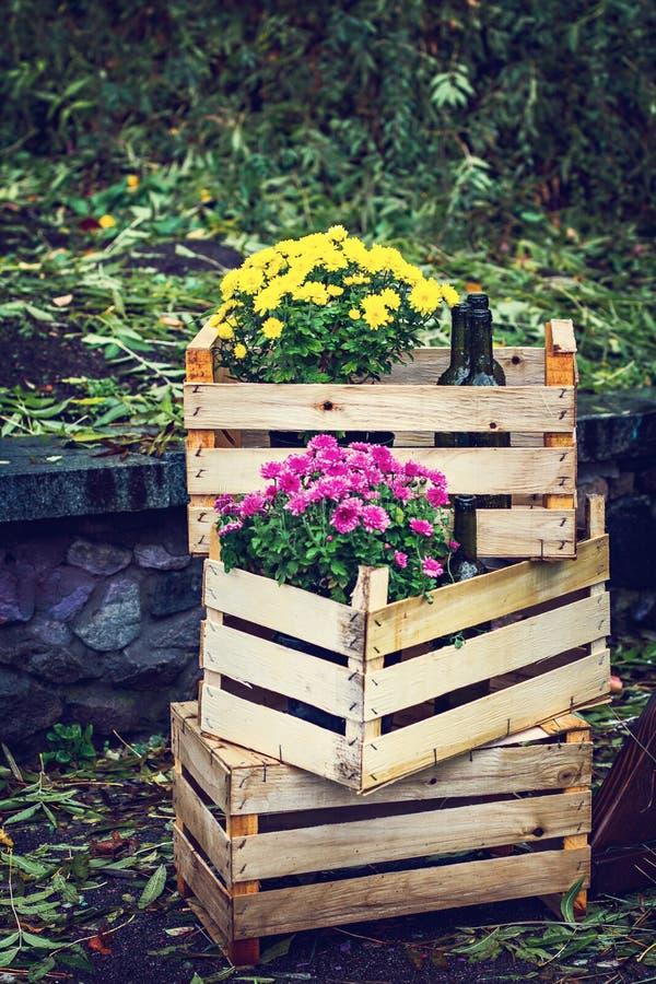 Halloween, ringraziamento, decorazione della casa e giardino per la festa Scatole di legno con i crisantemi e le bottiglie di vin immagine stock libera da diritti