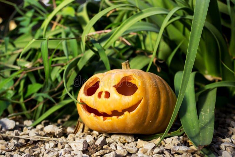 Halloween Scary Pumpkin In The Gren Grass Brushwood Stock