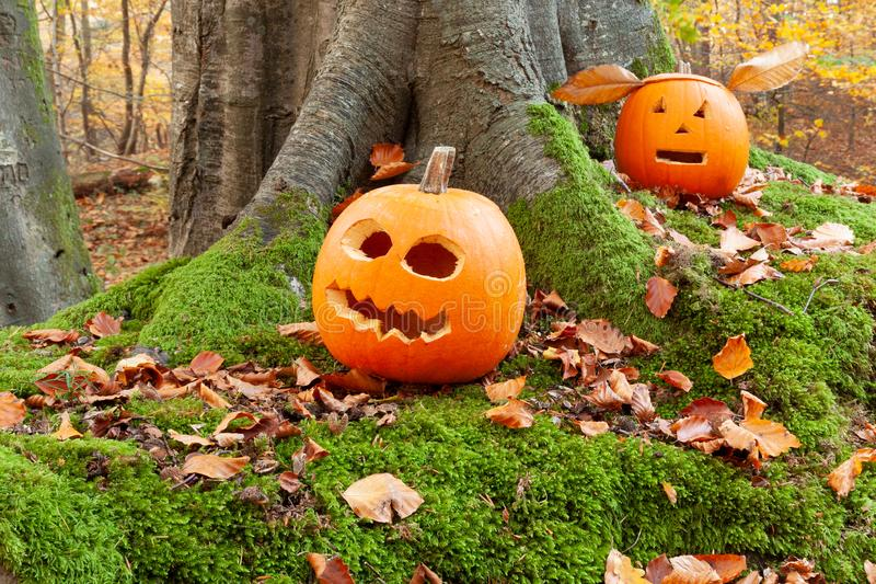Halloween scary pumpkins in the woods. Scary halloween pumpkins with cutout faces, set in the forests in autumn stock images