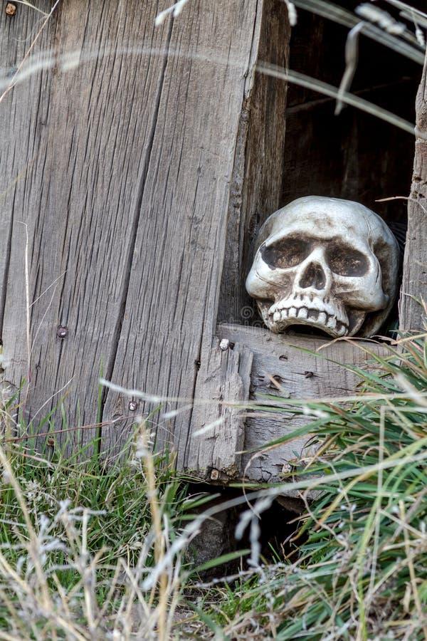 Halloween-Schädel und -dekorationen lizenzfreie stockbilder