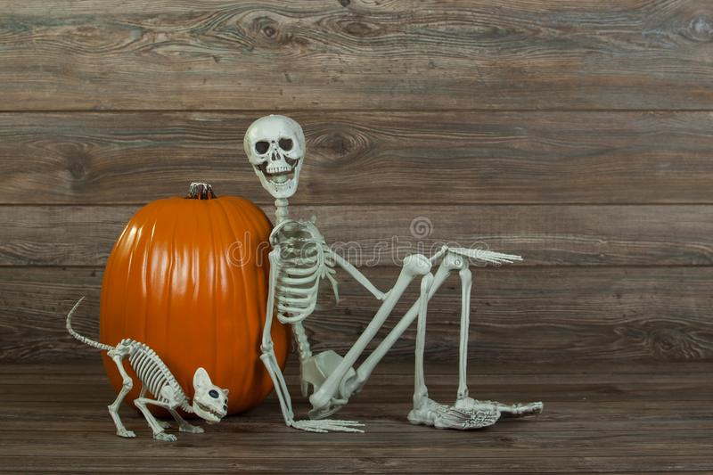 Halloween skeleton and cat skeleton with pumpkin royalty free stock images
