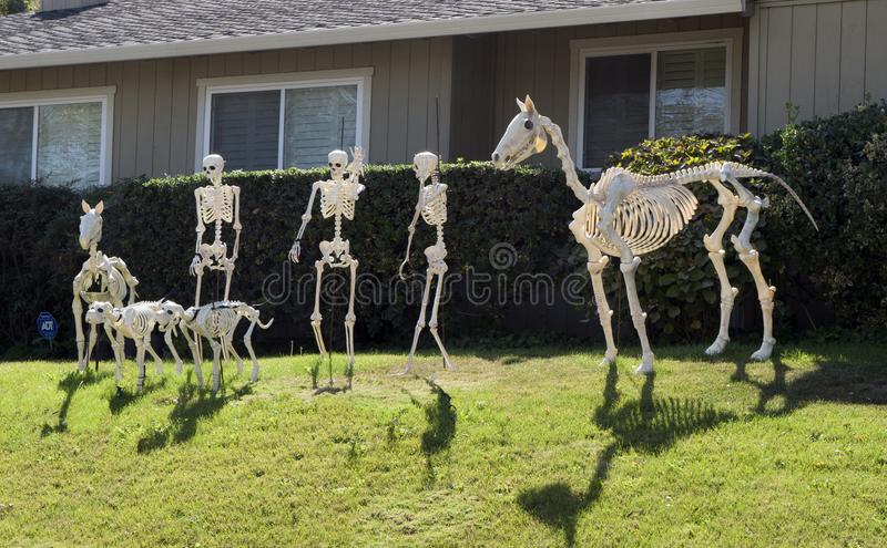 Halloween Skeleton group, horse, few people and dogs royalty free stock photo