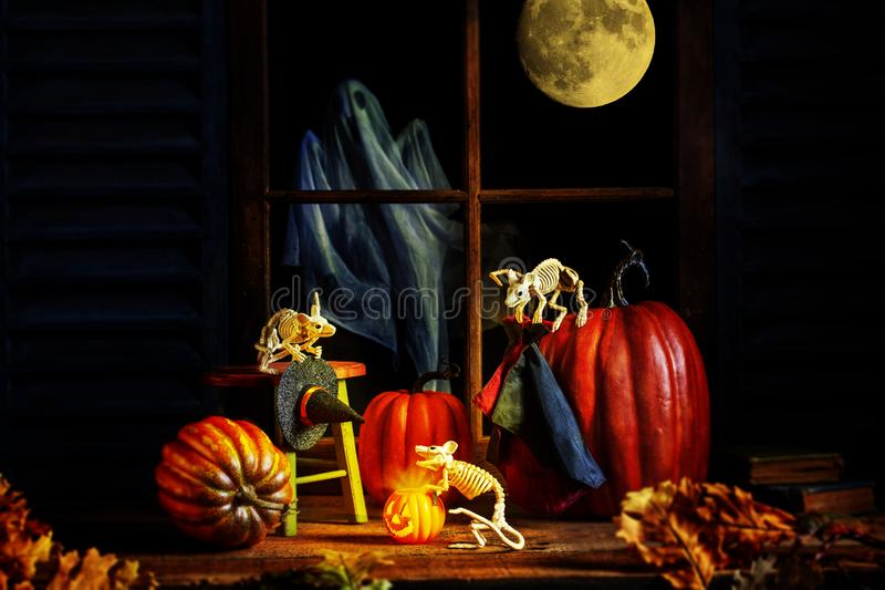 Halloween Skeleton Mice Pumpkins Ghost stock photography