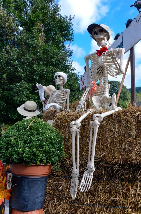 Halloween skeletons riding on a harvest hayride in the fall. Fall days give way to blue skies and skeleton friends on an autumn hayride royalty free stock photo