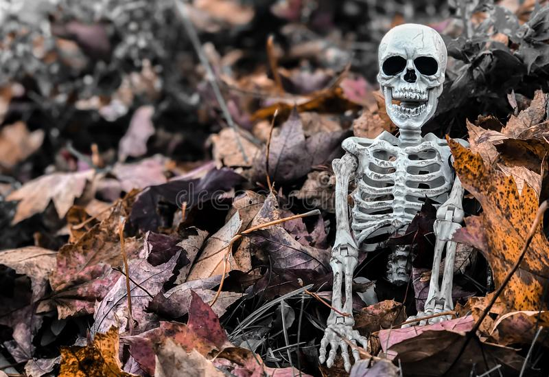 Halloween-Skelett in den Fall-Blättern stockfotografie