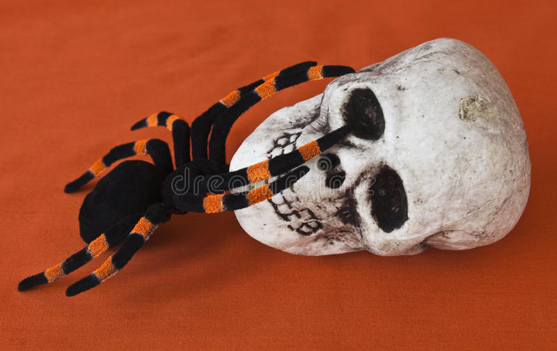 Halloween Skull and tarantula. On an Autumn background stock image