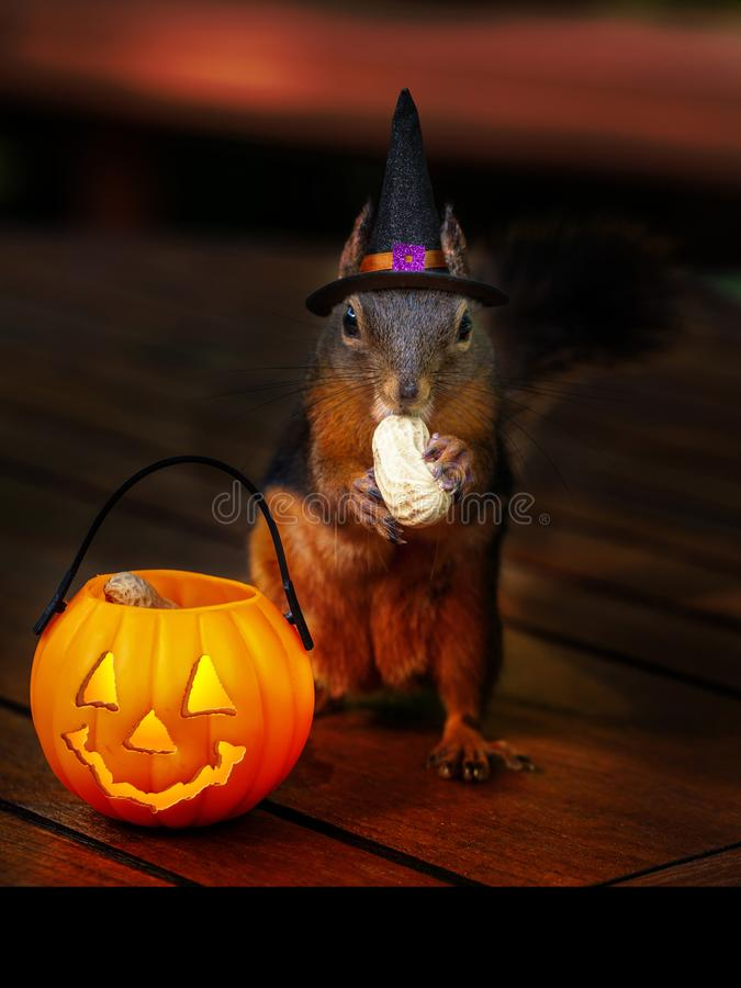 Halloween Squirrel Trick-or-Treat for Peanuts royalty free stock photos
