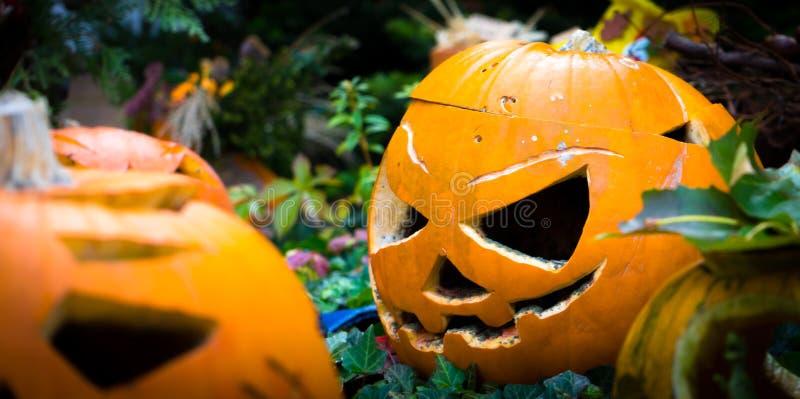 halloween symbol sniden halloween pumpa fotografering för bildbyråer