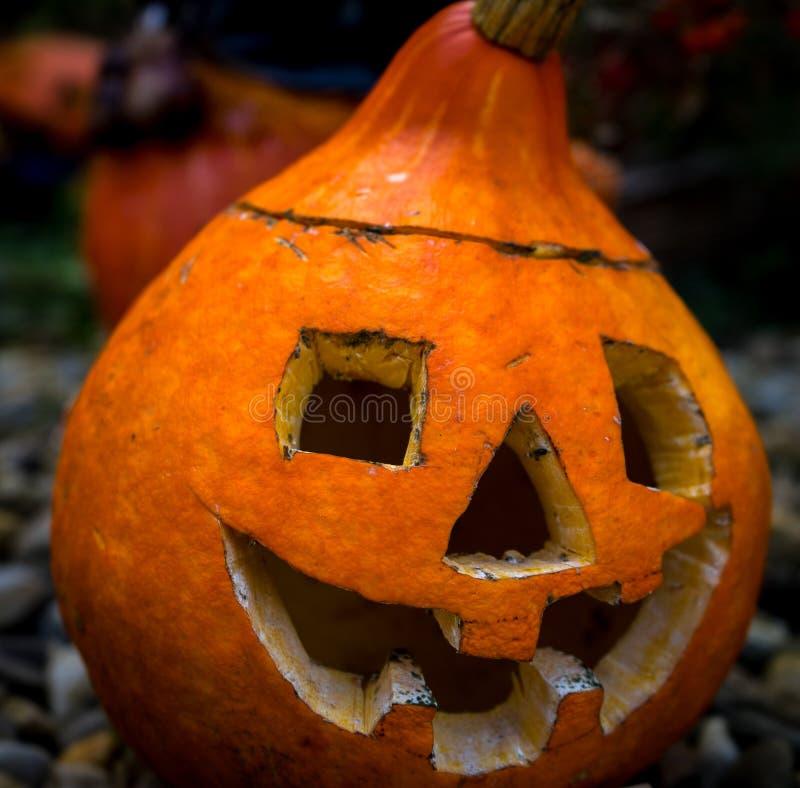 halloween symbol sniden halloween pumpa arkivbilder