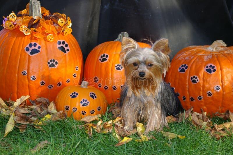 halloween szczęśliwy zdjęcia stock