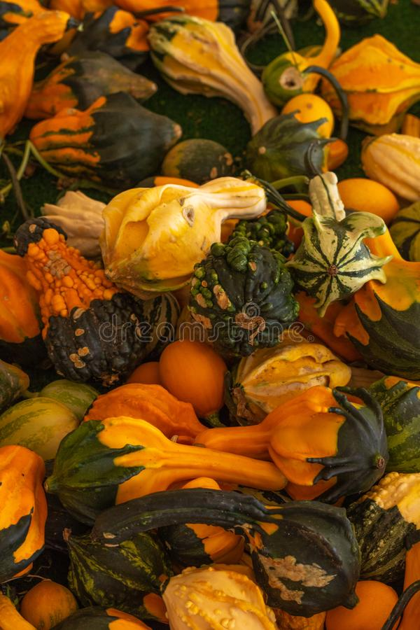 Halloween, Thanksgiving seasonal fall autumn holiday celebration background, a close up of a variety of unique unusual squash gour. Ds on display royalty free stock image