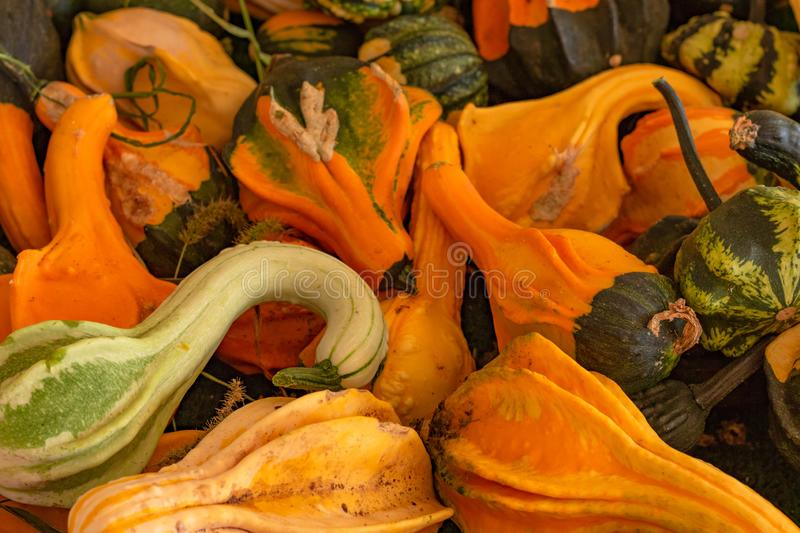 Halloween, Thanksgiving seasonal fall autumn holiday celebration background, a close up of a variety of unique unusual squash gour. Ds on display royalty free stock photo