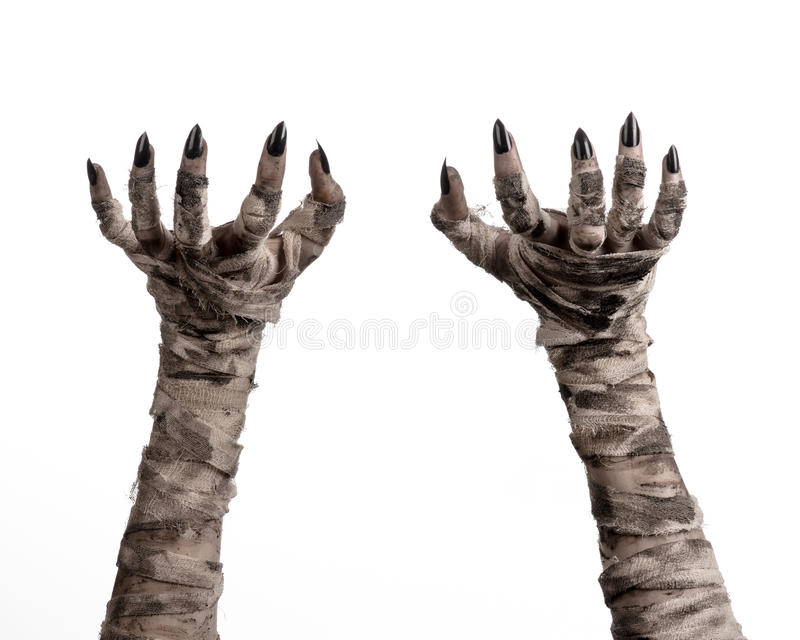 Halloween theme: terrible old mummy hands on a white background. Studio royalty free stock photo