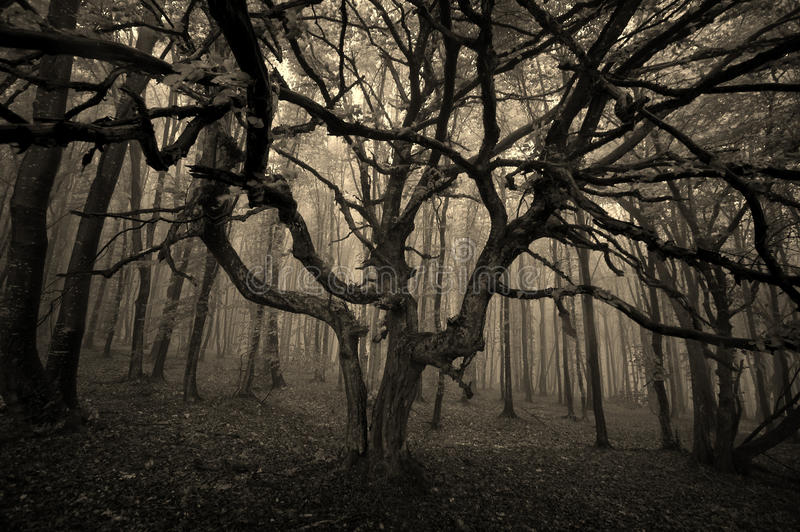 Halloween tree with spread branches royalty free stock images