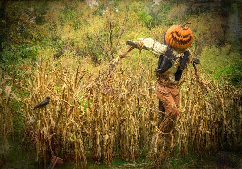 Halloween-Vogelscheuche mit Kürbis-Kopf in einem Getreidefeld stockfoto