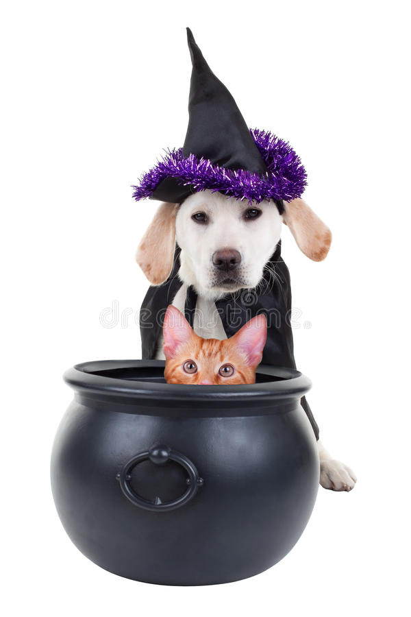 Halloween Witch Dog And Cat Stock Photo