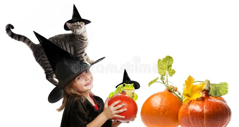 Halloween witch with a cat stock photography