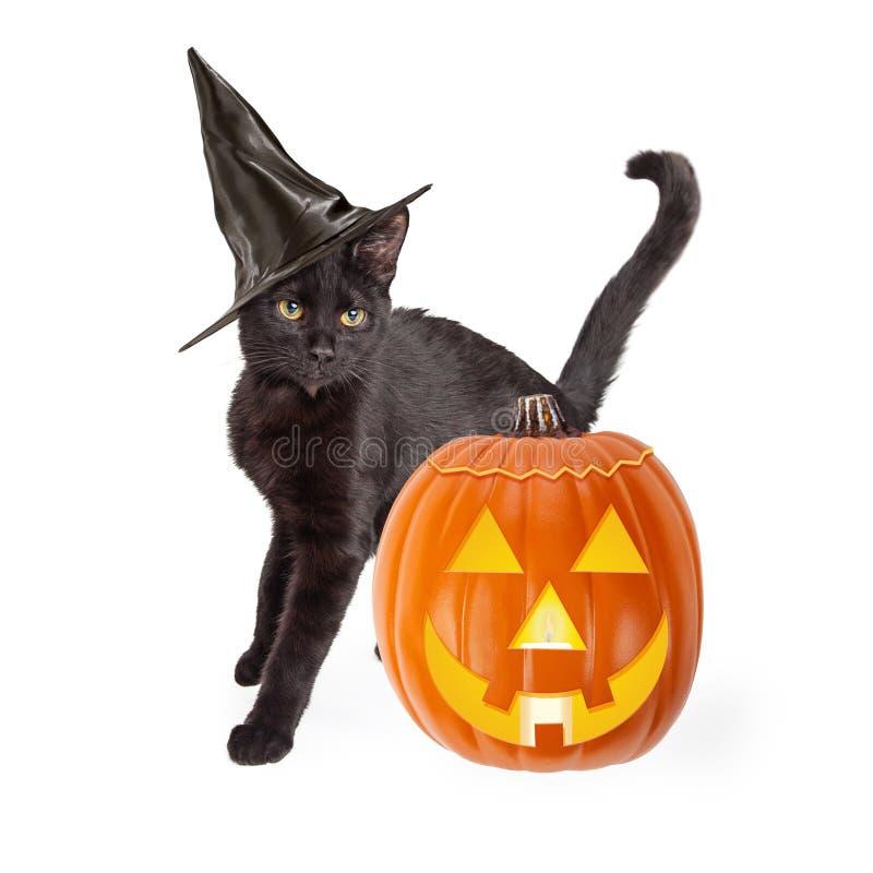 Halloween Zwarte Cat With Carved Pumpkin royalty-vrije stock foto's