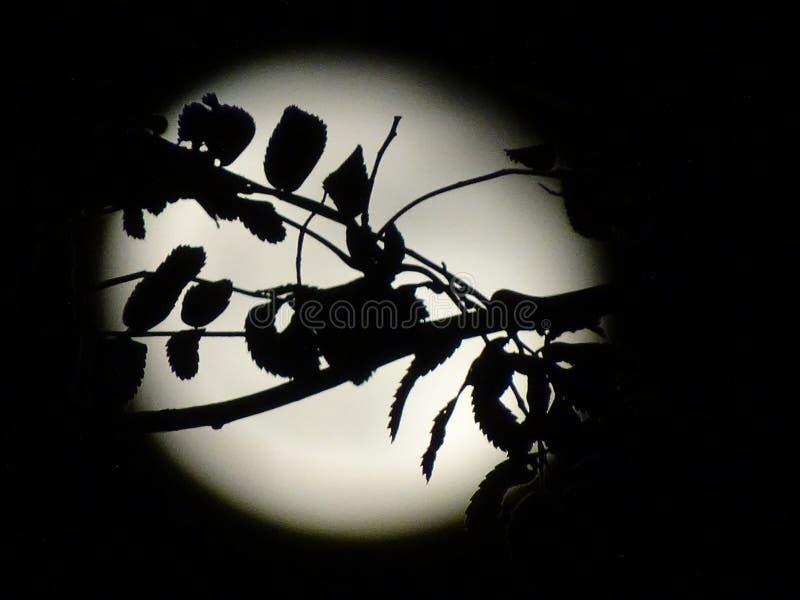 Halloweenowa księżyc obraz royalty free