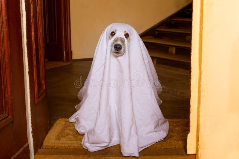 Halloweenowy ducha psa trikowy lub funda obraz royalty free