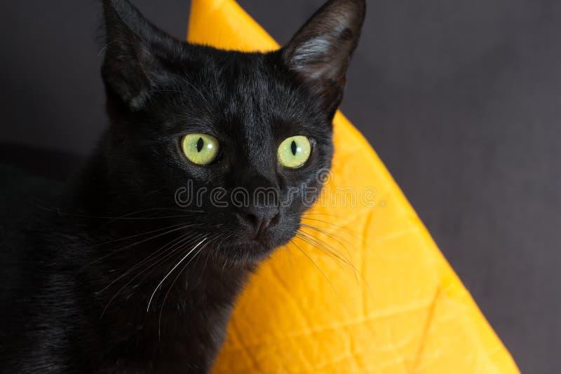 Halloweenowy pojęcie, Czarny kot Twarz Domowy zwierzęcia domowego patrzeć atten obrazy royalty free
