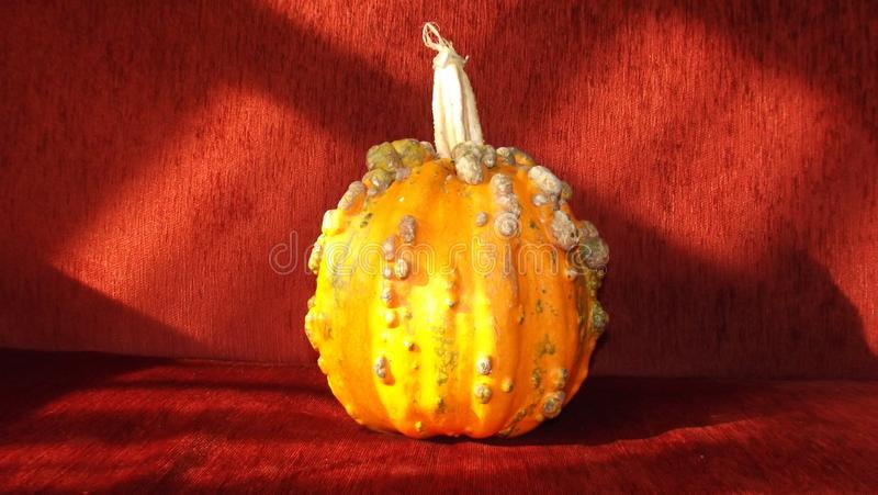 Halloweenowy pomarańczowy bani i czerwieni tło obrazy stock