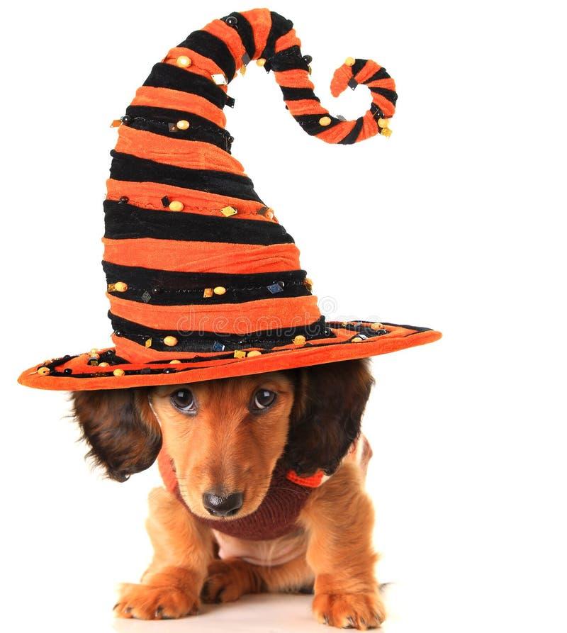 Halloweenowy szczeniak fotografia royalty free