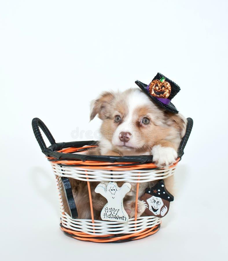 Halloweenowy szczeniak obraz royalty free