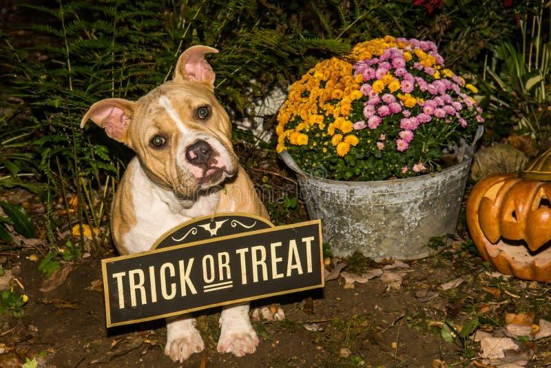 Halloweenowy szczeniak zdjęcie royalty free