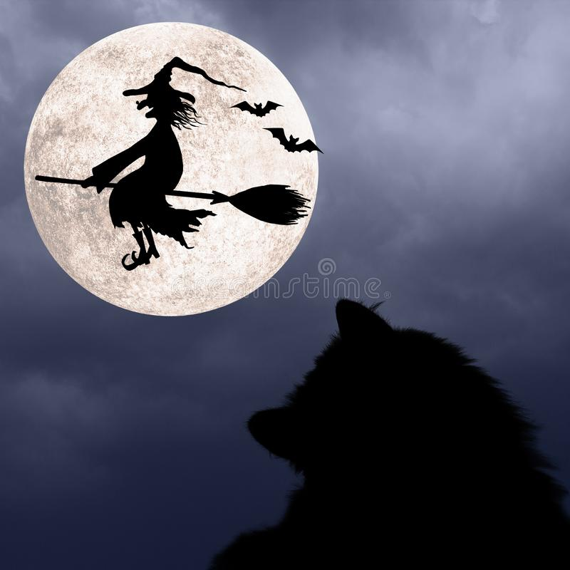 Halloweenowy tło z kotem, nietoperzami, księżyc w pełni i latanie czarownicą, zdjęcie stock