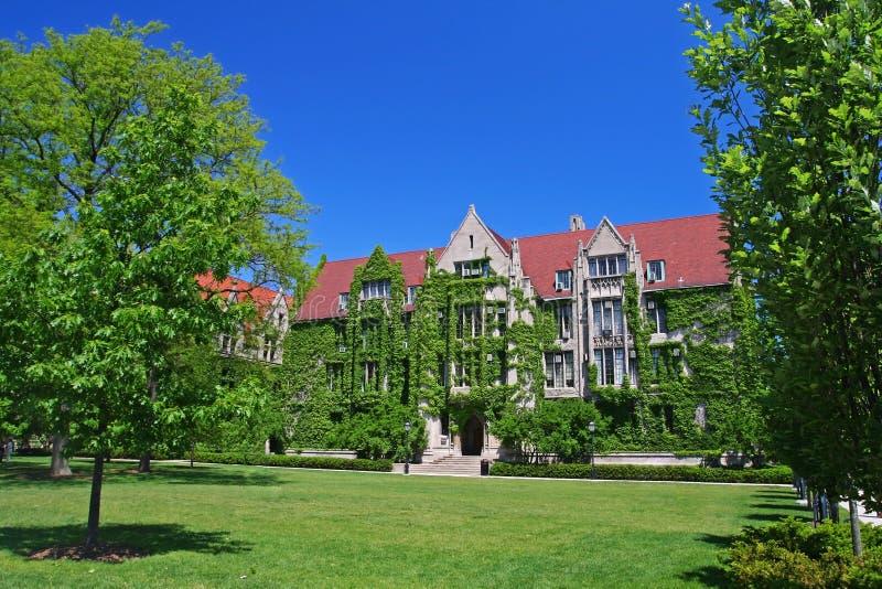 Halls plaqués de lierre à l'Université de Chicago image stock