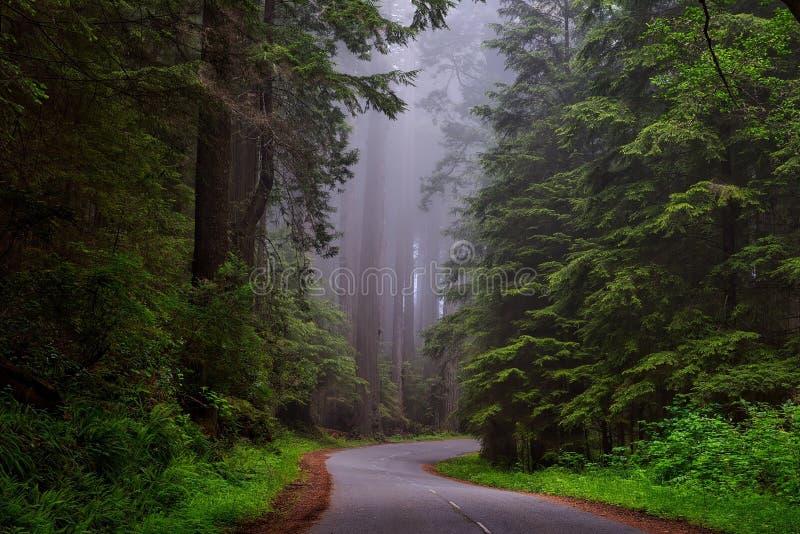 Hallway Between Tree At Daytime Free Public Domain Cc0 Image