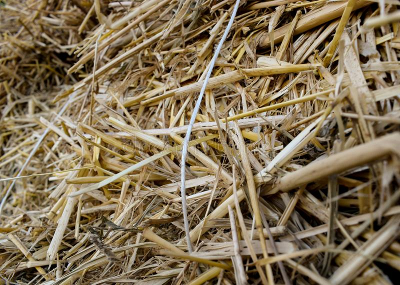 Halm σωρός ξηροί μίσχοι και φύλλα των μικρών δημητριακών στοκ εικόνες
