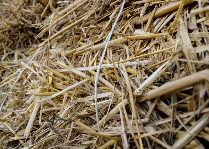 Halmstapel droge stammen en bladeren van kleine graangewassen stock afbeeldingen