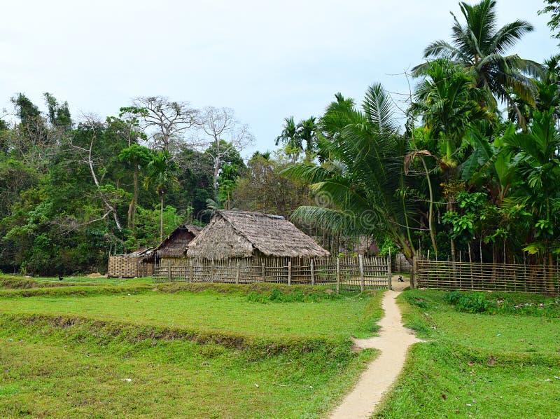 Halmtäckte kojor, spår till och med Paddy Field, kokospalmer - landskap på den stam- byn, Baratang ö, Andaman Nicobar, Indien royaltyfri fotografi