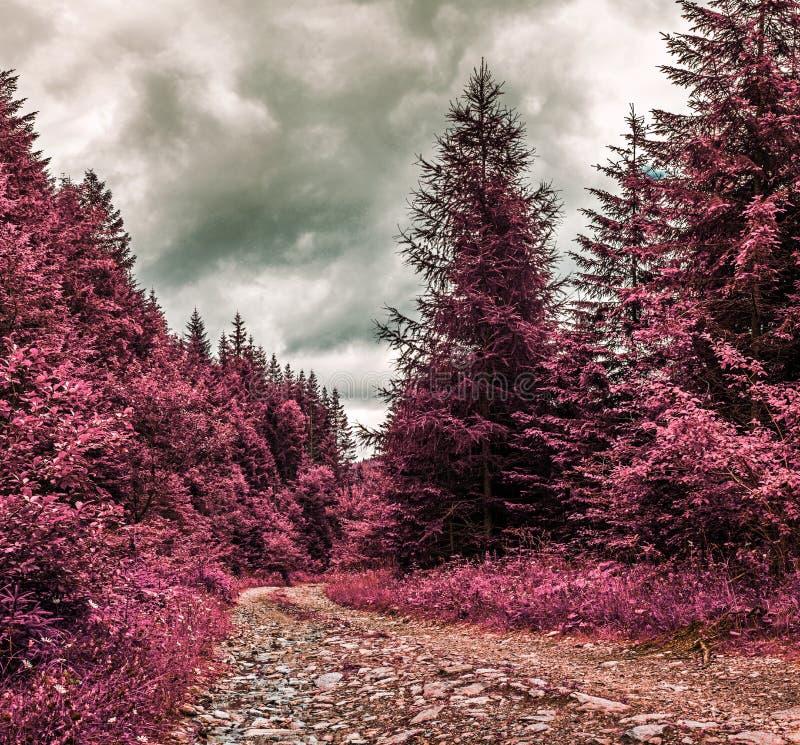 Halna droga przez lasu - Infrared filtr zdjęcia royalty free