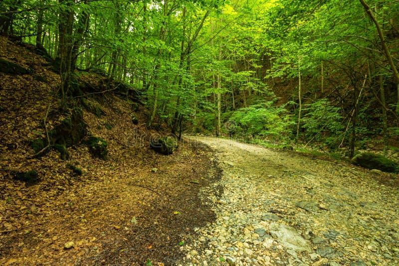 Halna droga przez zielonego lasu zdjęcia stock