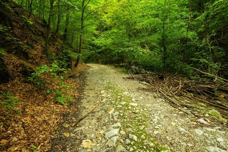 Halna droga przez zielonego lasu zdjęcie royalty free